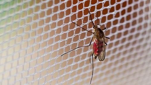 Tela mosquiteira em Porto Alegre