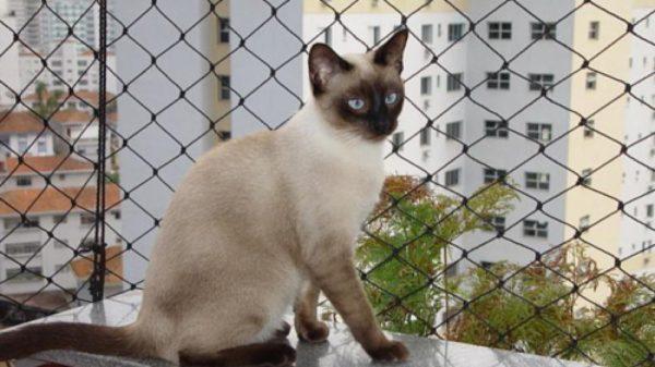 Tela para Gatos em Porto Alegre
